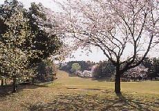 藤ケ谷カントリークラブ