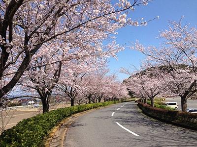 桜ゴルフ倶楽部
